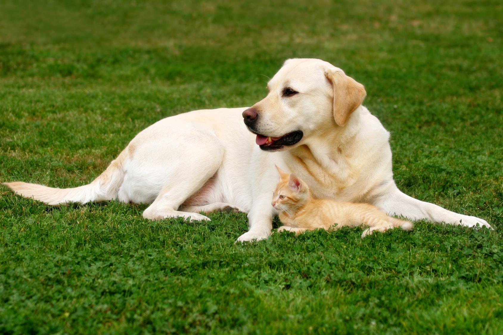 Hund und Kätzchen